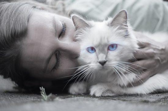 chat protégé antipuces