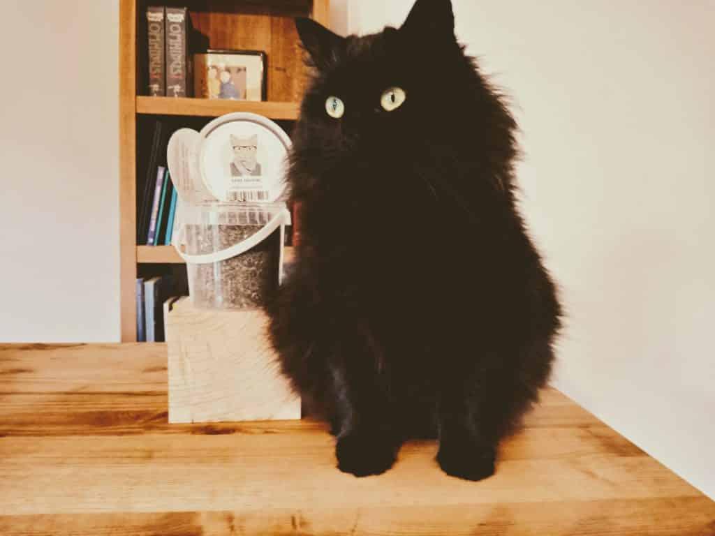 utiliser l'herbe au chat catnip