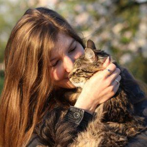 chat câliné