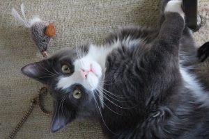 chat joueur