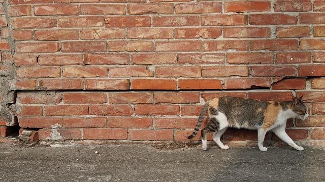 chat mur briques