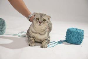 chat pelote de laine