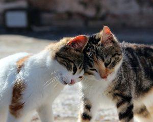 deux chats tête à tête