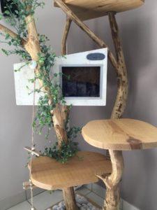 arbre à chat branche feuille france