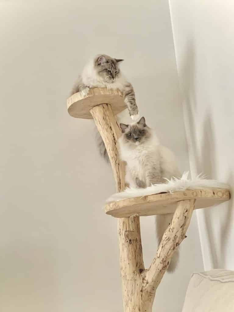 arbre a chat design bois naturel