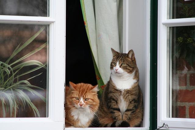 chat regardant par la fenêtre