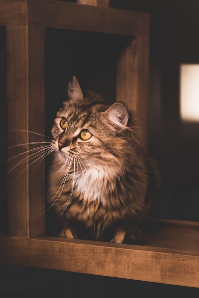 chat surface en bois