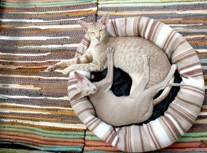 chat accessoires design