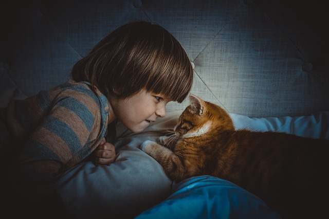 chat enfant regard face