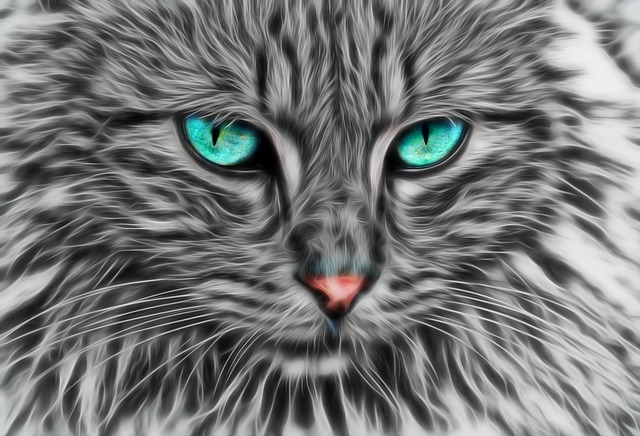 chat gris yeux vert illustration