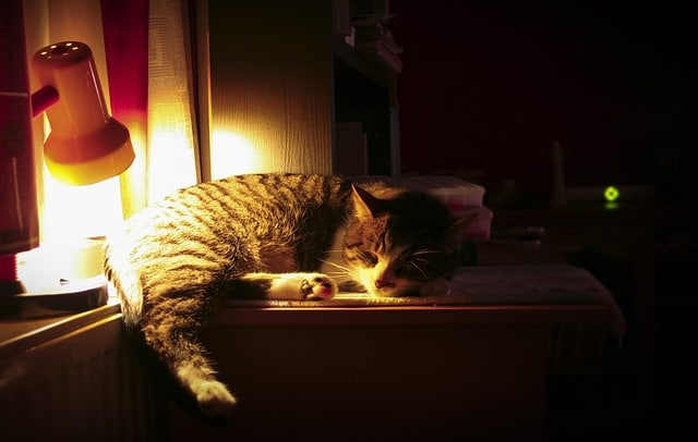 chat sieste bureau lampe