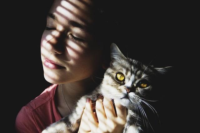 Comment Habituer Son Chat A Sa Nouvelle Maison Et L Adopter