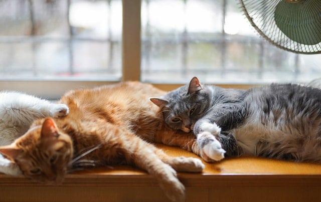 3 chats allongés
