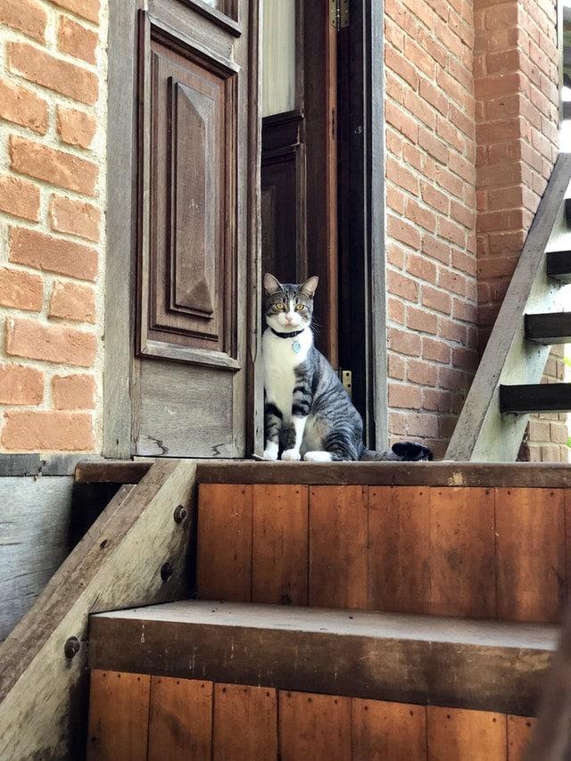 chat seuil porte maison