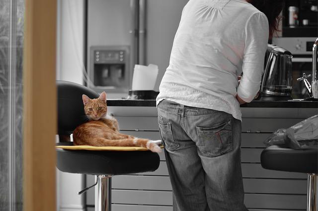 chat siège cuisine