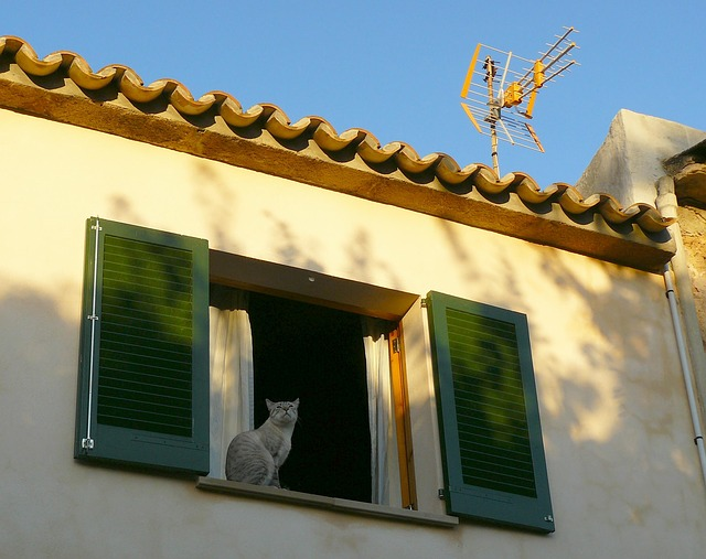 nouvelle maison chat
