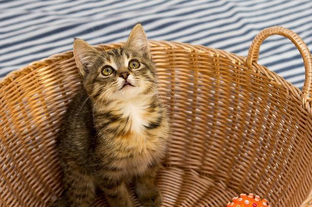 chat dans son panier
