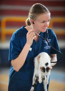 chat vétérinaire auscultation
