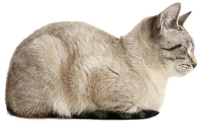 chat reposé