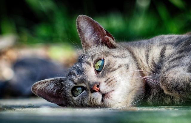 chat apaisé
