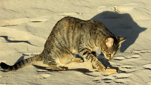 chat creuse le sable