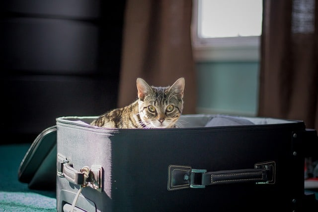 chat dans la valise