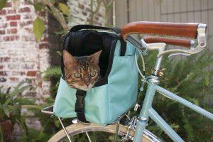 chat en vélo