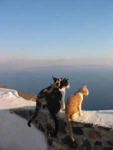 chat ciel horizon