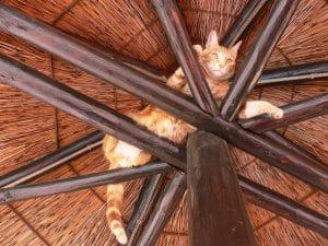 chat élevé