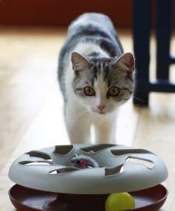 chat jouet élaboré