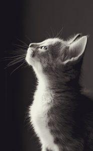 chat profil génétique