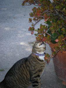 chat reniflant plantes