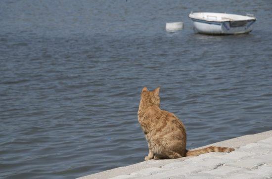 chat vacances mer