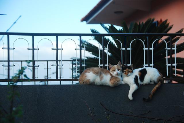 chats dehors allongés