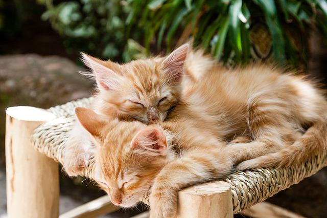 chats tout mignon