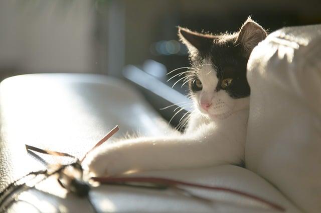 jouet garni herbe au chat