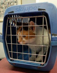 cage de transport pour chat iata