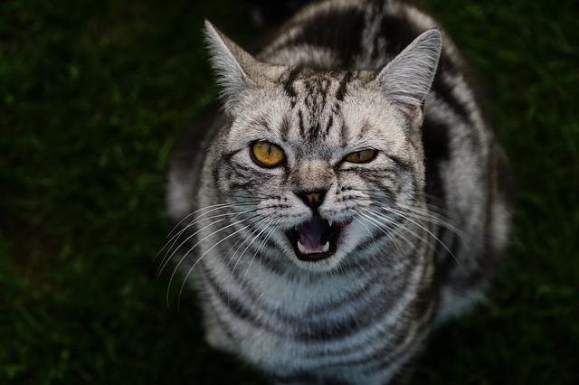 chat oeil fermé
