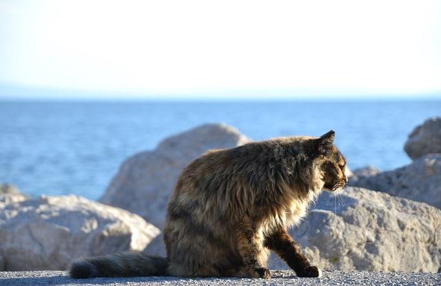 chat vulnérable en extérieur