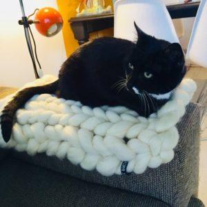 coussin chat laine merinos epaisse