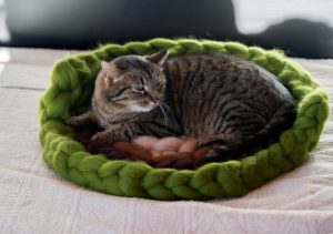 coussin chat semi ouvert laine