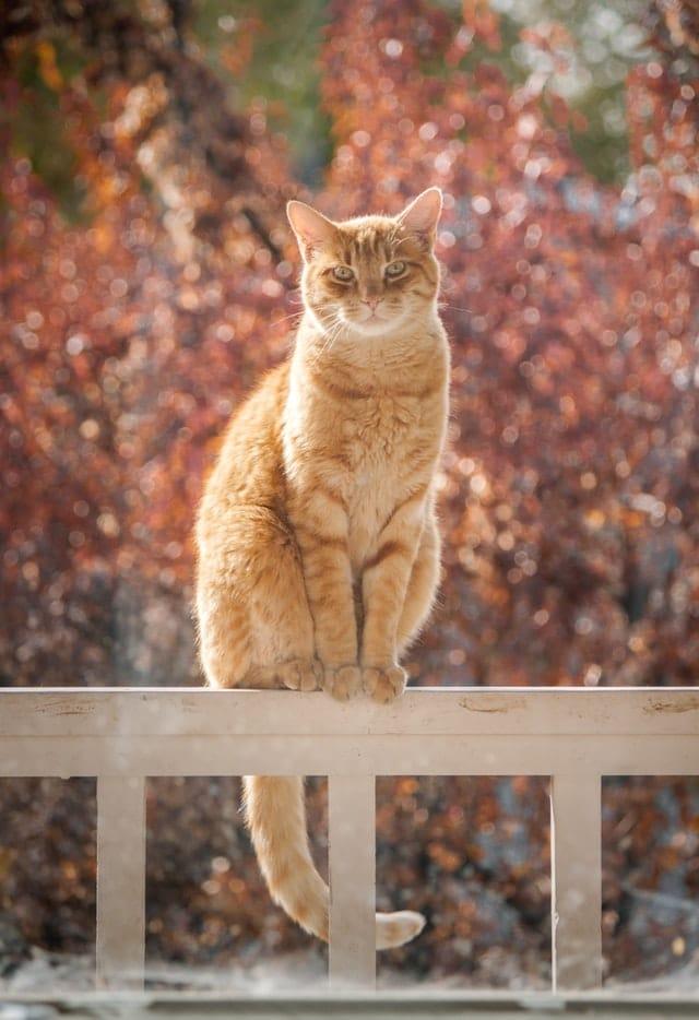 chat calme majestueux