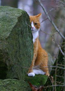 chat derrière un rocher