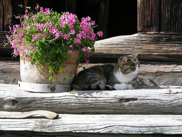 chat extérieur plante pot