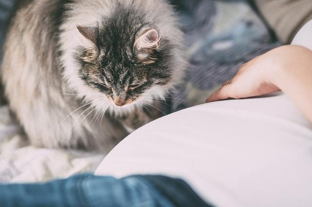 chat femme à côté