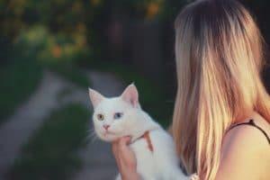 chat porté dans les bras