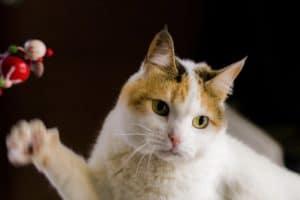 jouet doudou chat