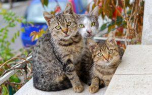 trois chats