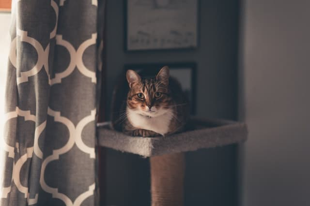 chat reposant arbre à chat