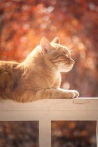 chat planche bois